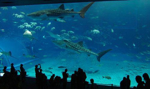 Aquario-Okinawa2
