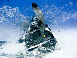 O Corsair cercado de vida marinha