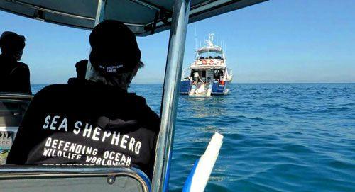 Sea-Shepherd1