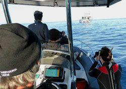 Sea-Shepherd2