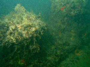 naufragio-amarracao