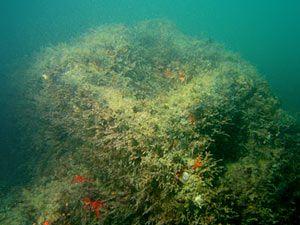 restos-naufragio1