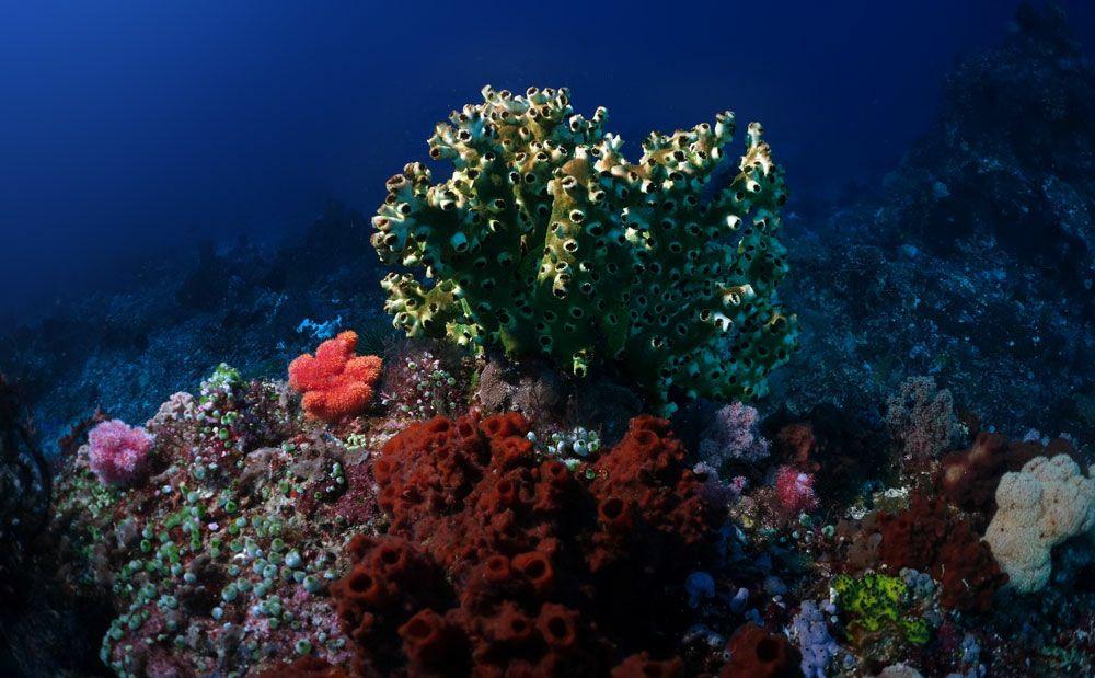 Foto: Tamara Garcia - Celta Divers